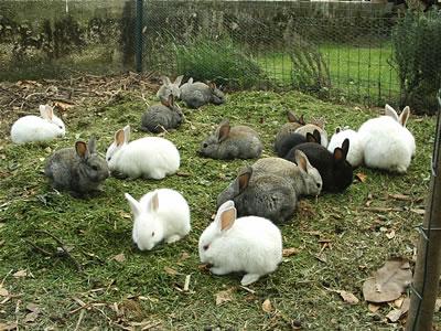 Allevare Bio 3 « Conigli & Conigli