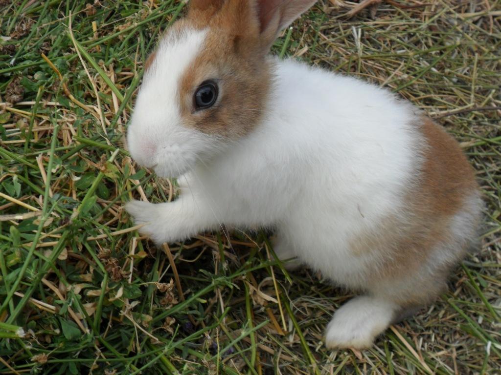 Conigli settembre 2013 (11)