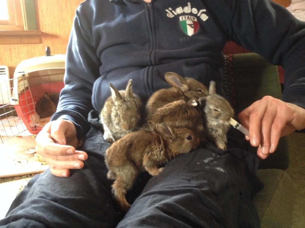 Allattamento artificiale coniglietti